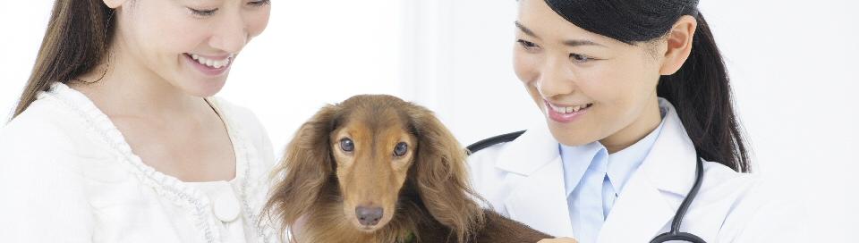 獣医科サイト